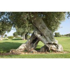 Large choix en bois d'olivier demandez nous ferons un devis